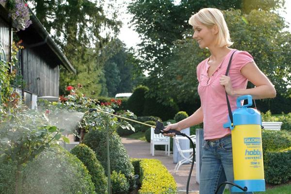 Женщина опрыскивает декоративные кустарники