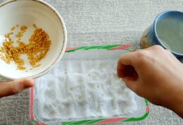 Проращивание семян перца
