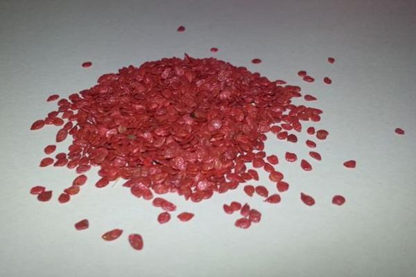 Обработанные семена помидора