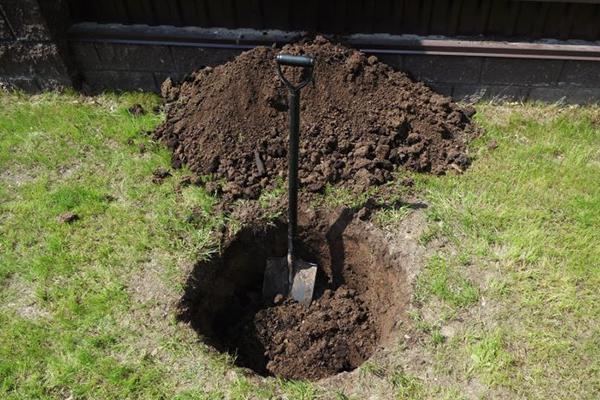 Посадочная яма для куста смородины