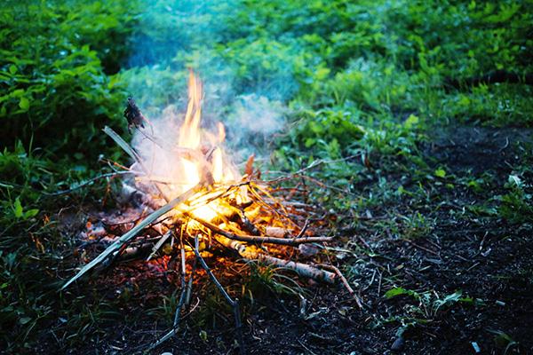 Сжигание зараженного куста смородины
