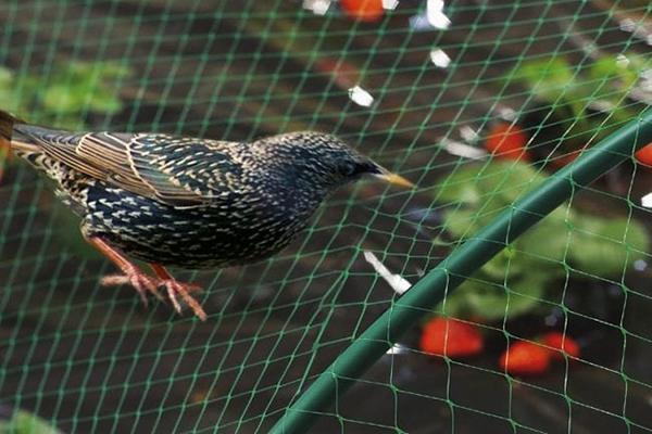 Сетка для защиты посадок от птиц