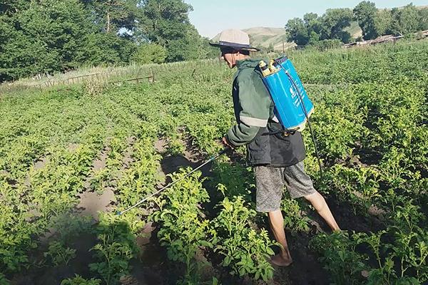 Опрыскивание картошки