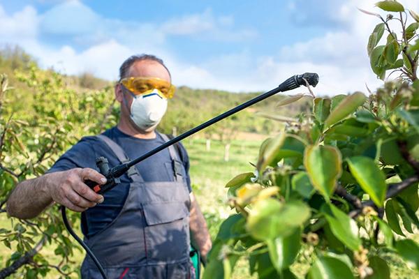 Мужчина опрыскивает фруктовые деревья