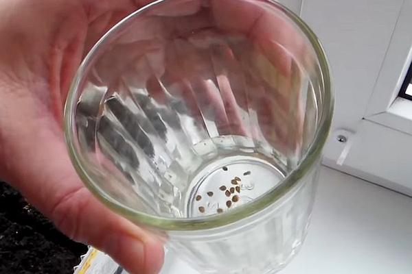Замачивание семян баклажана в  перекиси водорода