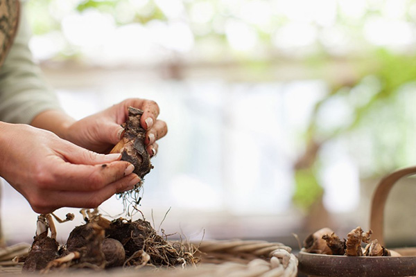 Подготовка луковиц тюльпанов к хранению