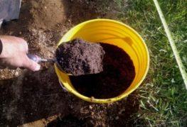 Почва для ягод
