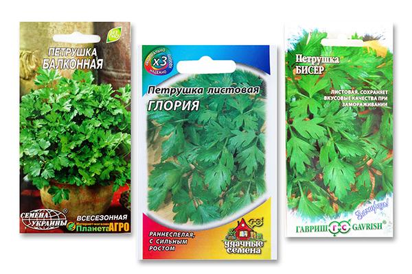 Семена петрушки для выращивания на балконе