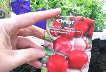 Семена редиса Черриэт