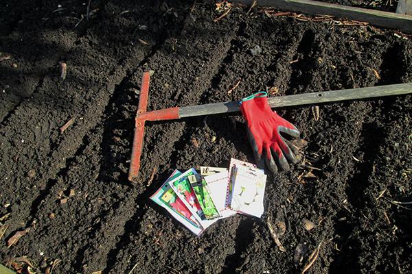 Посев редиса в открытом грунте
