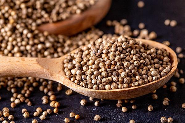 Семена кинзы