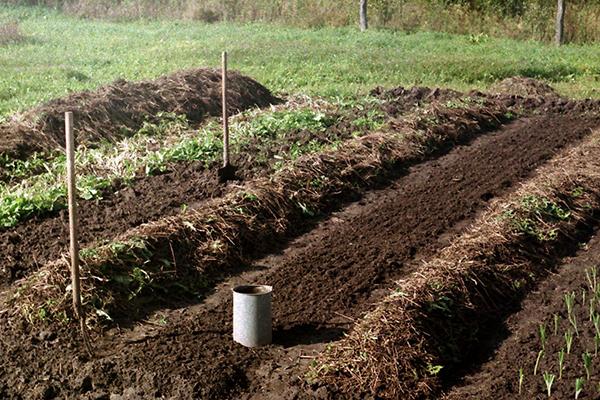Подготовка грядки для посева петрушки