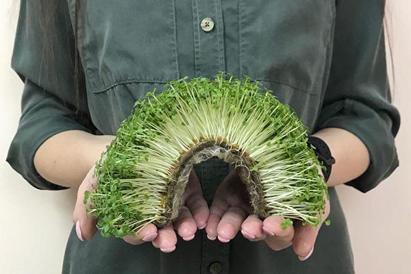 Микрозелень, выращенная на специальном коврике