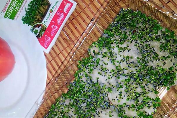Выращивание микрозелени базилика без грунта
