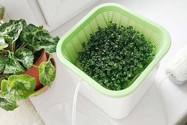 Прибор для выращивания микрозелени