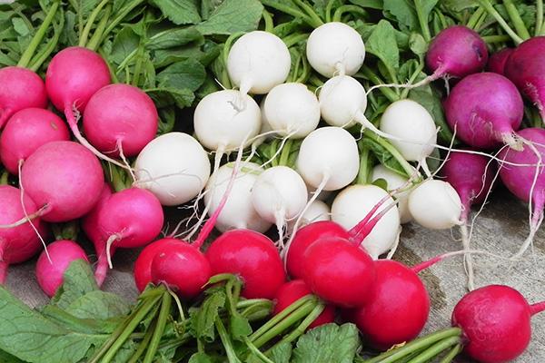 Редис разных сортов для всесезонного выращивания