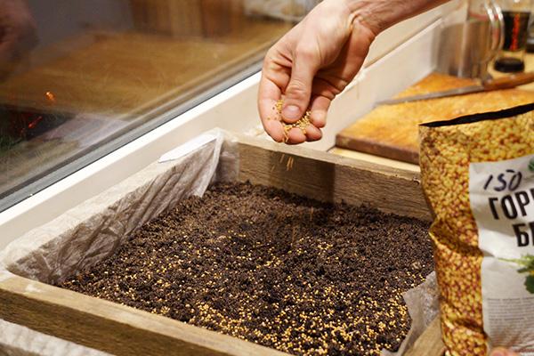 Посев горчицы на микрозелень