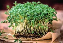 Микрозелень кресс-салата