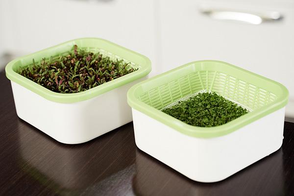 Простые проращиватели для зелени