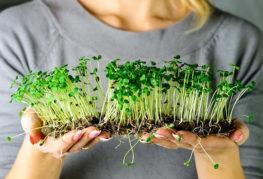 Готовая микрозелень
