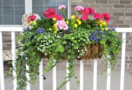Цветы в ящике на балконе