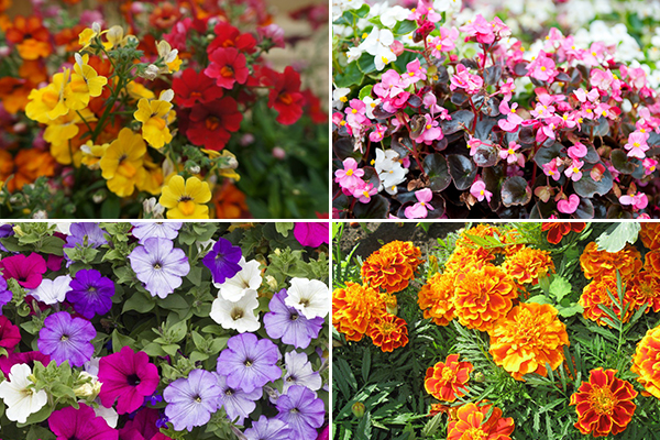 Неприхотливые цветы для выращивания на балконе