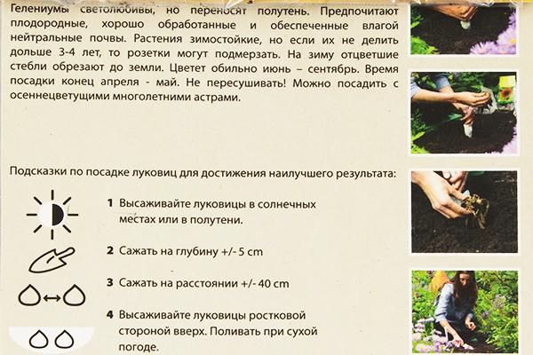 Инструкция по выращиванию гелениума из семян