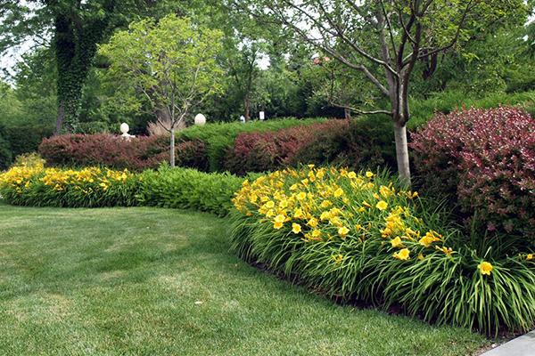 Желтый лилейник в ландшафтном дизайне