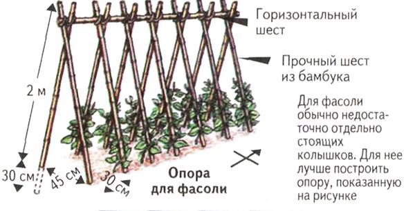 Схема опоры для подвязки фасоли