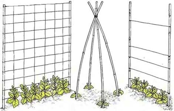 Виды опор для подвязки фасоли