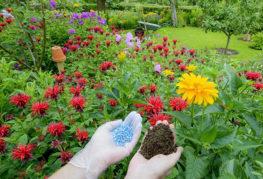 Подкормка садовых цветов в грунте