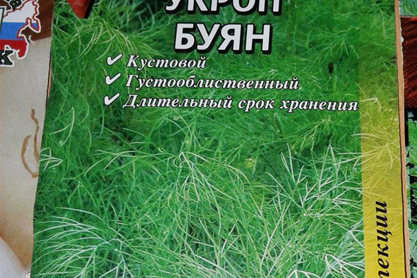 Укроп Буян