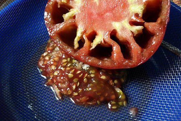 Извлечение семян из помидора