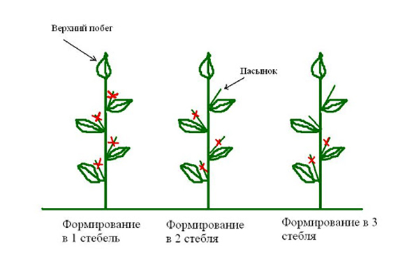 Схема удаления пасынков у перца