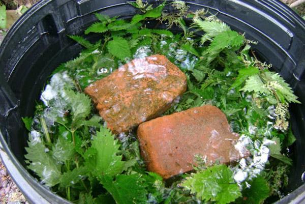 Приготовление зеленого удобрения из крапивы