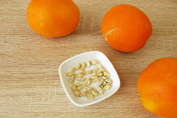 Косточки апельсина