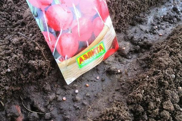Посев редиса