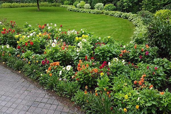 Бордюрные цветы в ландшафтном дизайне