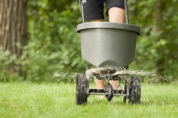 Внесение удобрения для газона