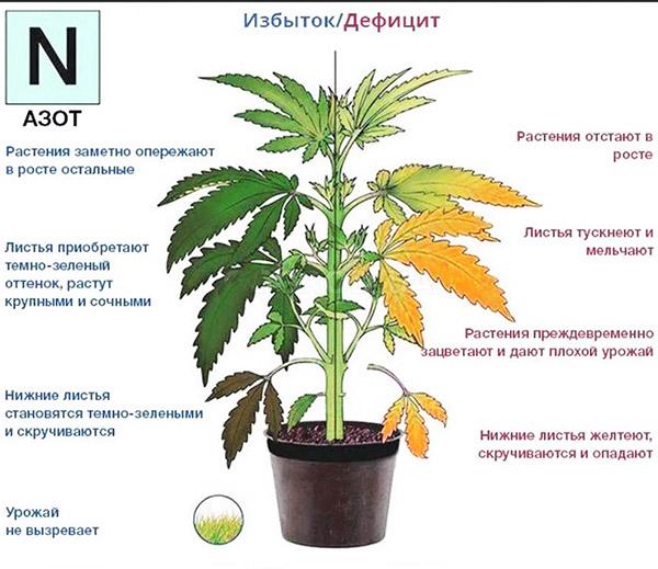 Признаки избытка и дефицита азота у растений