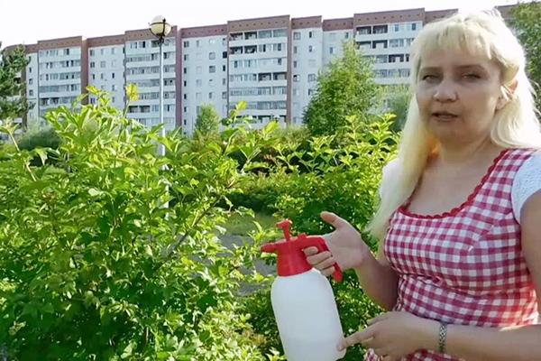 Женщина опрыскивает растения инсектицидом