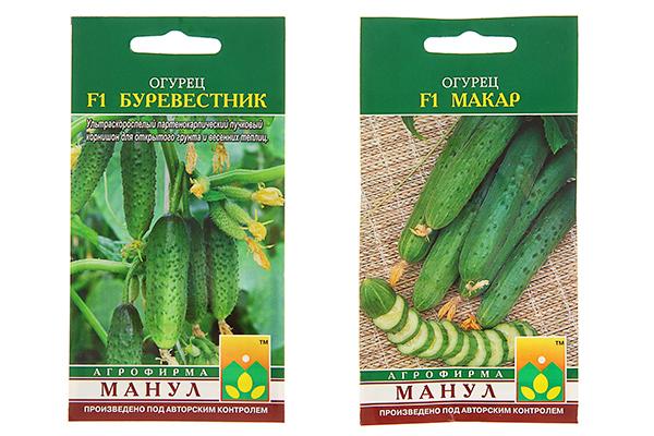 Семена огурцов Буревестник и Макар