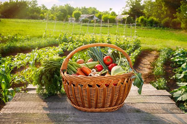 Урожай овощей с огорода