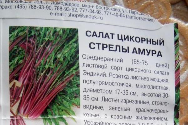 """Семена цикорного салата """"Стрелы амура"""""""