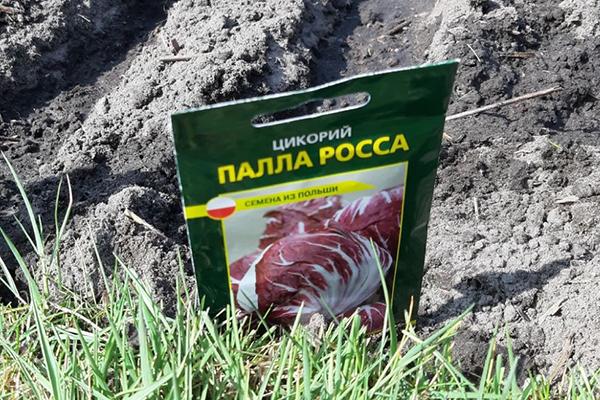 Семена цикорного салата Палла Роса