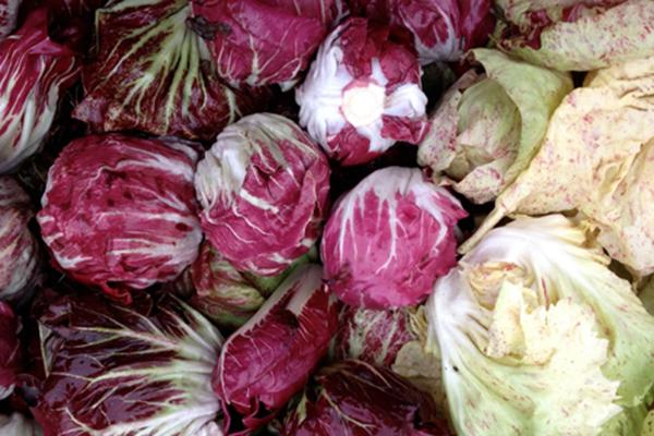 Цикорный салат с розовыми и белыми листьями
