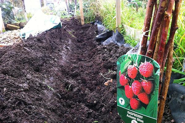 Траншея с питательной почвой для посадки малины