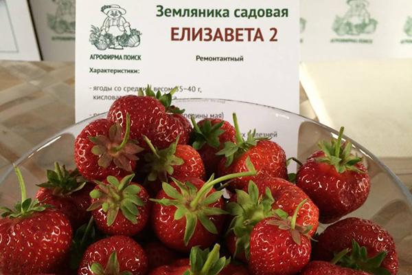 """Земляника садовая """"Елизавета 2"""""""