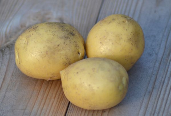 Картофель с рассыпчатой мякотью