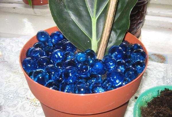 Растение в гидрогели